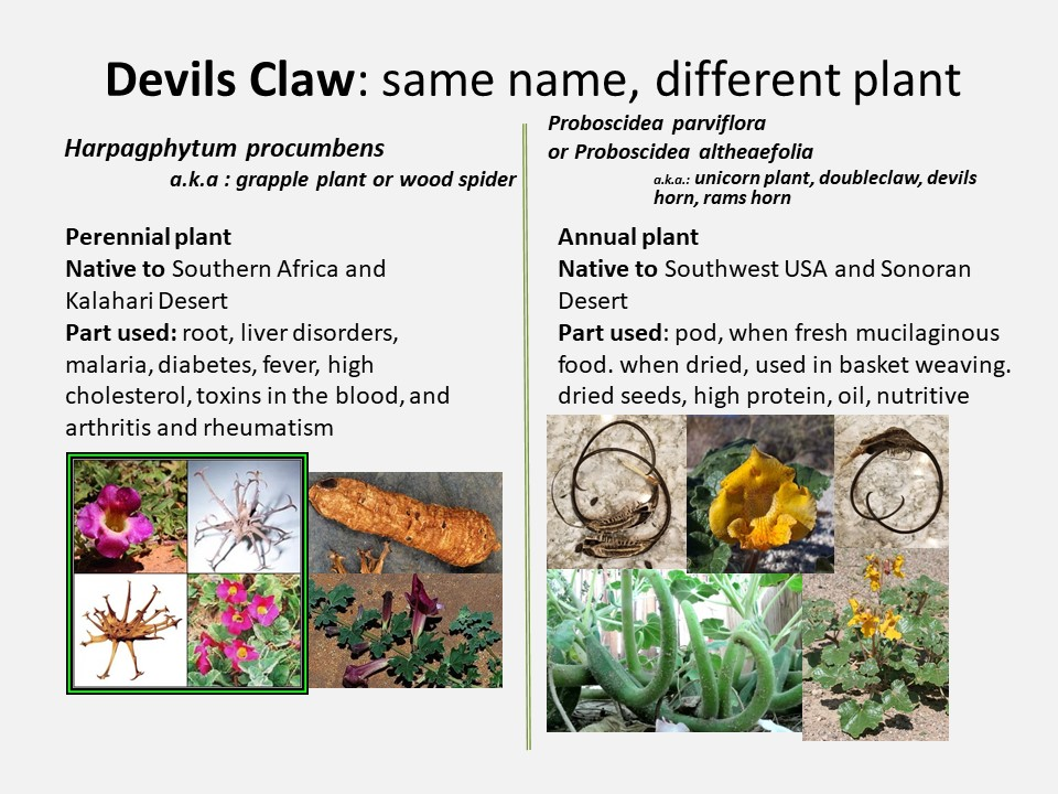 What's in a name? Same name, different plant » invibe herbal